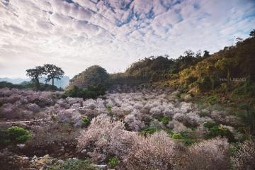 Khám phá thung lũng Nà Ka - thiên đường hoa mận trên cao nguyên Mộc Châu