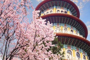 Ngắm hoa anh đào nở rộ và 3 hoạt động thú vị tại Đài Loan dịp xuân về