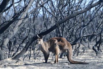 Úc kêu gọi cộng đồng giúp đỡ sau thảm họa cháy rừng bằng cách du lịch đến xứ sở này