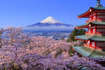Lên lịch đón mùa hoa anh đào đẹp nhất Nhật Bản ở Tohoku