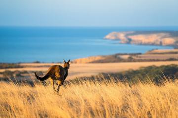 Nước Úc đã từng đẹp đến thế này trước thảm họa cháy rừng