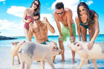 Ghé thăm thiên đường 'đảo lợn' ở Bahamas - nơi những chú lợn biết xin ăn, bơi lội cùng du khách