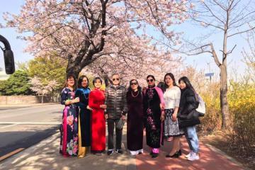 Du xuân 2020 đến những địa điểm ngắm hoa anh đào đẹp nhất