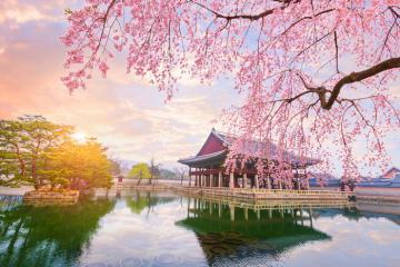 Những điều bạn cần biết khi lên kế hoạch du lịch Seoul năm 2020