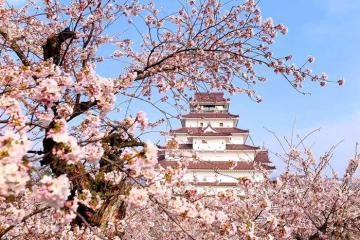 Du lịch Tohoku Nhật Bản: Xuân về ghé Aomori và Fukushima, đắm chìm trong vẻ đẹp thiên nhiên