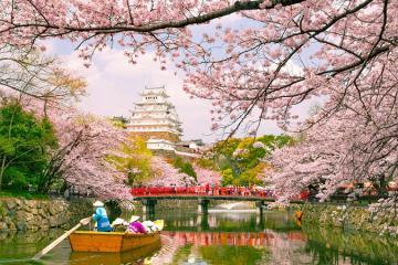 Lên lịch 'săn' hoa anh đào nở rộ ở Nhật Bản