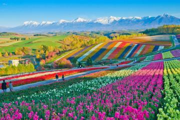 Du lịch Hokkaido Nhật Bản và 10 điều du khách cần lưu ý