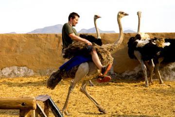 Khám phá hòn đảo bí ẩn, cưỡi đà điễu và trải nghiệm tại Nam Phi