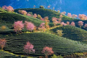 Khám phá 3 địa điểm ngắm hoa đào ở Sapa đẹp mê hoặc lòng người