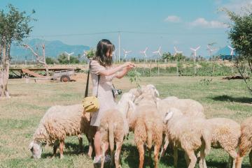 Review chuyến du lịch Ninh Thuận 3N2Đ của cô gái trẻ, ngắm cảnh đẹp và ăn hải sản thỏa thích