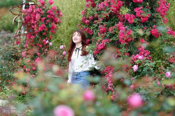 Thung lũng hoa hồng - chốn thần tiên giữa lòng Sapa