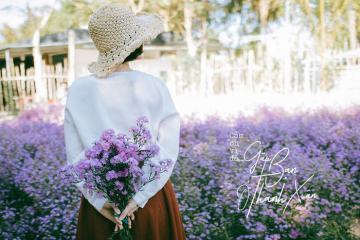 Hóa nàng thơ trong vườn hoa thạch thảo tím ở Cần Thơ