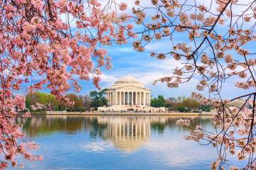 Đến Washington D.C ngắm hoa anh đào nở rợp trời, đón mùa xuân lãng mạn trên đất Mỹ