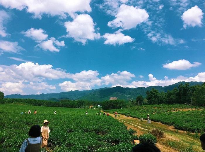 đồi chè Đông Giang Quảng Nam