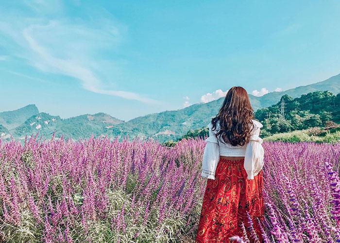 Rụng rời trước đồi hoa oải hương Sapa tím lịm một vùng trời Fansipan