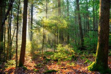 6 địa điểm du lịch sinh thái ở Mỹ cho những người đam mê săn thực phẩm tươi