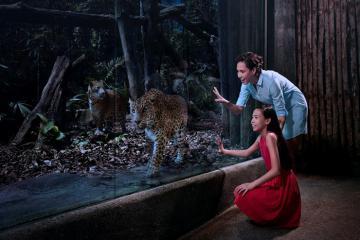 Bạn sẽ muốn biết những điều này trước khi đi du lịch Night Safari Singapore