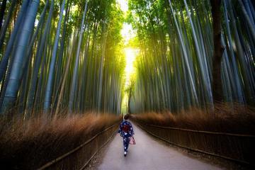 Lạc vào những khu rừng đẹp bùng nổ trên Instagram