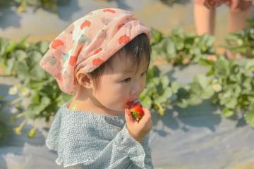 Du lịch Mộc Châu mùa dâu tây: Thưởng thức dâu chín mọng và có ảnh xịn mang về