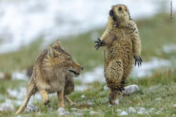 Khoảnh khắc ấn tượng và hài hước của động vật hoang dã