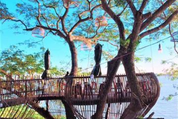 Hot rần rần quán cà phê trên cây ở Cần Thơ, bạn đã check in chưa?
