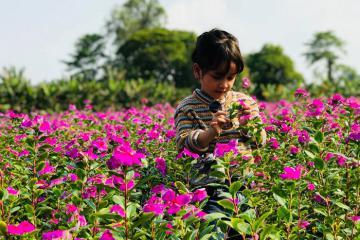 Cánh đồng hoa dừa cạn An Giang đang rực nở, bạn đã sẵn sàng check in chưa?