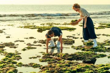 Cánh đồng rong biển ở Phan Rang đẹp tựa phim Hàn - điểm đến 'siêu hot' được giới trẻ săn lùng