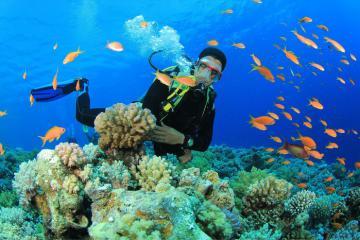 10 địa điểm lặn biển đẹp nhất thế giới: Có cả Hòn Ông Việt Nam