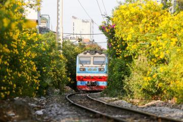 'Hot rần rần' điểm check-in vàng rực hoa huỳnh liên hai bên đường ray xe lửa Sài Gòn