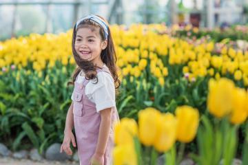Không cần đến Hà Lan, bạn vẫn có thể ngắm hoa tulip khoe sắc giữa lòng Hà Nội
