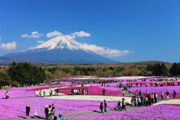 Nếu chỉ có một ngày làm sao khám phá Kawaguchiko, Nhật Bản trọn vẹn?