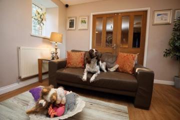 Khách sạn cho thú cưng nổi tiếng ở Anh: Đặt trước cả năm cũng chưa chắc có chỗ