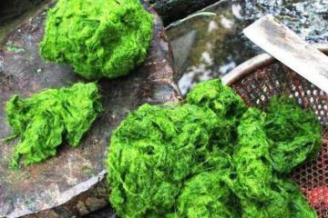 Độc đáo những món đặc sản được chế biến từ rêu đá núi rừng Tây Bắc