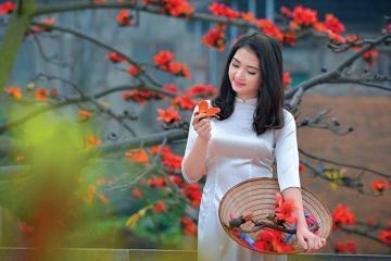 'Gom góp hồi ức ấu thơ' với sắc đỏ hoa gạo cùng những mùa hoa tháng 3 trên đất Việt