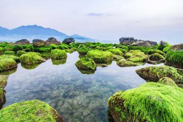 Đắm say mùa rêu đá ở Nam Ô, Đà Nẵng đẹp tựa như tranh