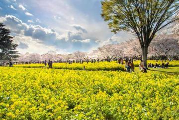 4 trải nghiệm mùa xuân tại Jeju bạn sẽ hối tiếc nếu bỏ lỡ