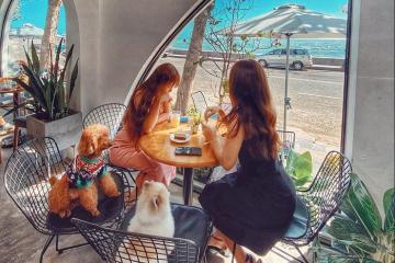 Đâu là quán cà phê view biển Vũng Tàu hot nhất đang được giới trẻ check in nườm nượp?