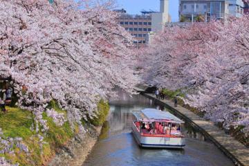 Xuân về du lịch Toyama Nhật Bản, đắm chìm trong vẻ đẹp vùng đất của núi và biển