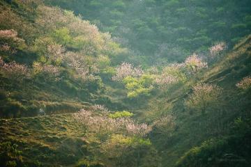 Ghim ngay 5 tọa độ ngắm hoa xuân Tây Bắc làm say lòng người lữ khách