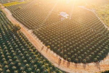 'Sống ảo cháy máy' tại vương quốc thanh long Lâm Xuân Phúc ở Bình Thuận đẹp như mơ