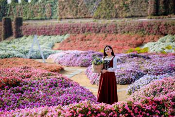 Có một thiên đường rực rỡ mang tên thung lũng hoa Hồ Tây