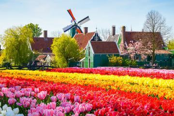 Du lịch châu Âu 7 ngày, mùa cao điểm ngắm hoa tulip mà vẫn tiết kiệm, chỉ từ 39,9 triệu đồng