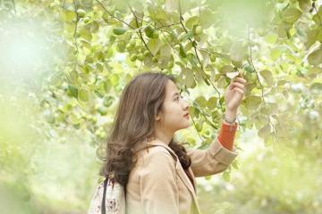Ăn táo mệt nghỉ, sống ảo thỏa thích tại vườn táo Út Nhàn Đồng Tháp sắp mở cửa
