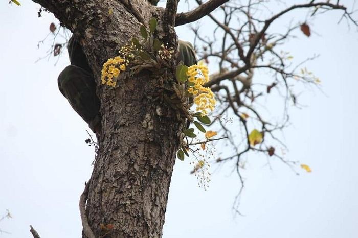 khu bảo tồn lan rừng Troh Bư