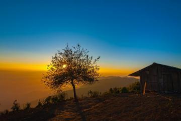 'Sống ảo thả ga' với tọa độ những cây cô đơn nổi tiếng khắp 3 miền đất Việt