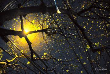 Đêm mơ Hà Nội phố thổn thức với những góc hình đẹp