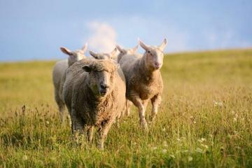 Đến thăm nông trại hạnh phúc bậc nhất nước Mỹ, ngôi nhà của gần 1.000 loài vật