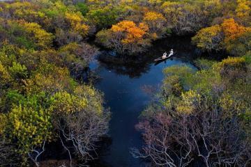 Rừng ngập mặn Rú Chá ở Huế - điểm đến lý tưởng cho tín đồ yêu thiên nhiên và thích sống ảo