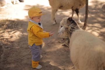 Khám phá Zoodoo Đà Lạt, check-in cùng kangaroo, lạc đà cực thú vị