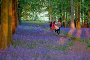 National Trust miễn phí vé hàng loạt công viên ở Anh giữa mùa dịch Covid-19